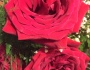 All of God's Roses HaveThorns
